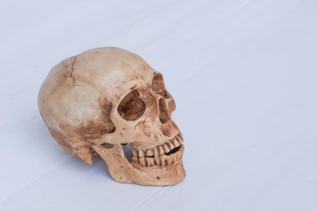 Vista laterale del teschio umano