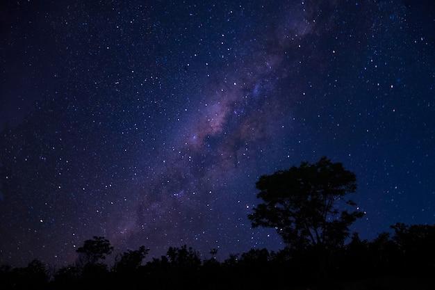 Vista laterale della magica via lattea stellata e verdi boschi estivi