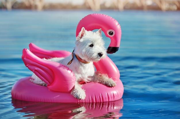 Foto di vista laterale di un cane che nuota sulla zattera di gomma