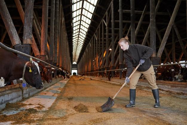 Ritratto di vista laterale di giovane donna che pulisce il capannone della mucca mentre lavora alla fattoria o al ranch della famiglia, spazio della copia