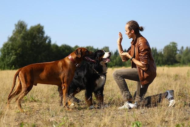 Vista laterale a un giovane uomo caucasico alla moda che tratta due cani montagna bernese e cane ridgeback sul campo estivo