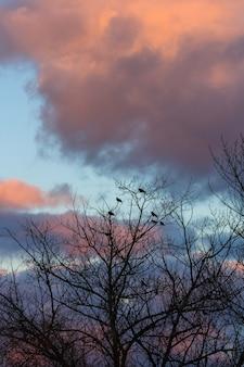 Sagoma di uccelli sull'albero senza foglie in inverno con nuvole colorate al tramonto.