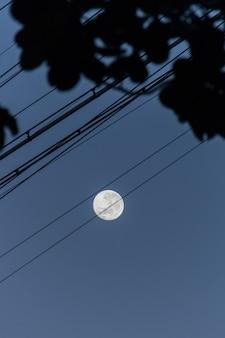 Silhouette di cavi e foglie con una bella luna piena a rio de janeiro in brasile.