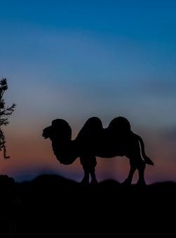 Siluetta dell'animale del cammello alla priorità bassa di tramonto.