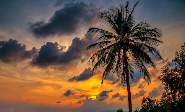 Sagoma palma da cocco sulla spiaggia al tramonto
