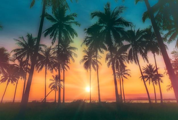 Profili le palme da cocco sulla spiaggia al tramonto. tono vintage.