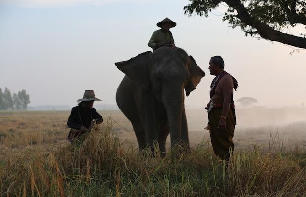 Silhouette elefante sullo sfondo di sunsetelephant thai in surin thailand