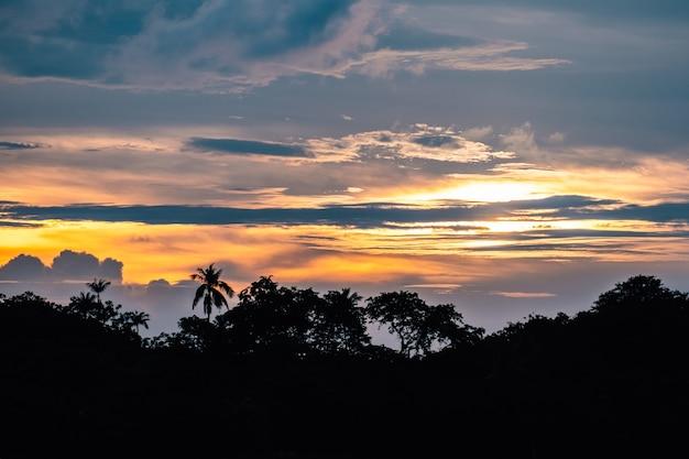 Silhouette di foresta con palme sulla spiaggia al tramonto