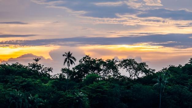 Silhouette di foresta con palme al tramonto
