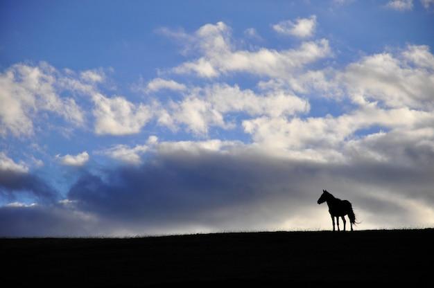 Sagoma di un cavallo