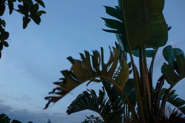Siluetta di una foglia di palma contro un concetto di primo piano del cielo scuro di viaggio e relax