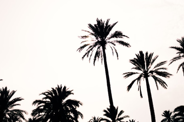 Silhouette di palme su uno sfondo di cielo