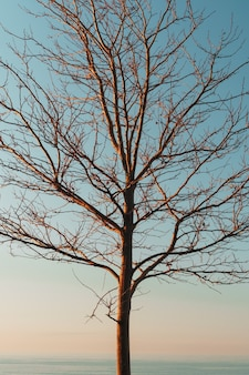 Silhouette di rami di un albero senza foglie su uno sfondo blu cielo.