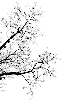 Albero della siluetta isolato su priorità bassa bianca