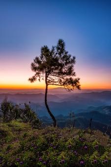 Albero della siluetta sulla montagna con scena di alba