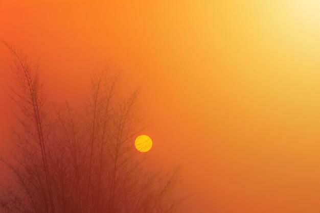 Silhouette di albero al tempo non impostato