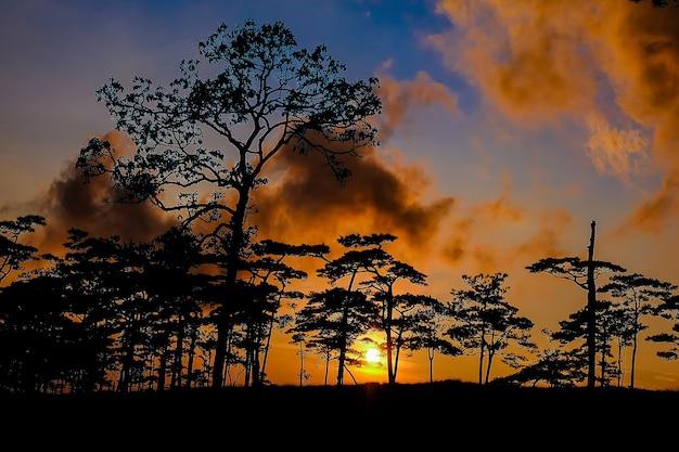 La sagoma dell'albero al tramonto è un bellissimo sfondo.