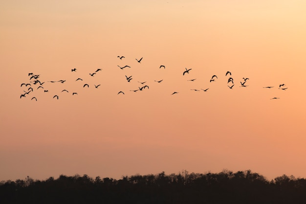 Le siluette degli uccelli che volano con il cielo del tramonto vanno a casa