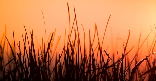 Sagome di erba su uno sfondo di cielo arancione, silhouette