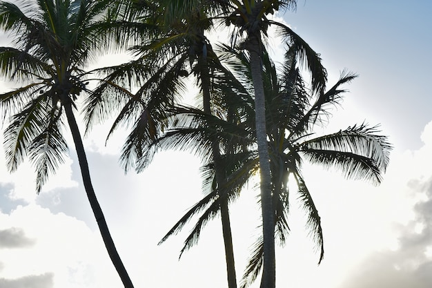Sagome di palme sullo sfondo del tramonto