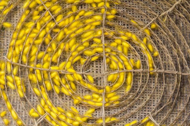 Bozzolo di seta che viene lavorato per produrre fibra di seta.