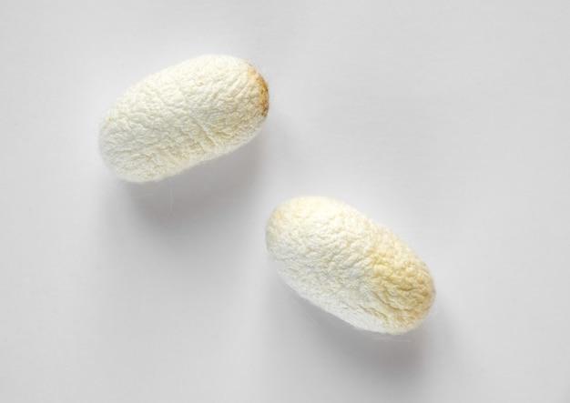 Bozzolo del baco da seta isolato su sfondo bianco