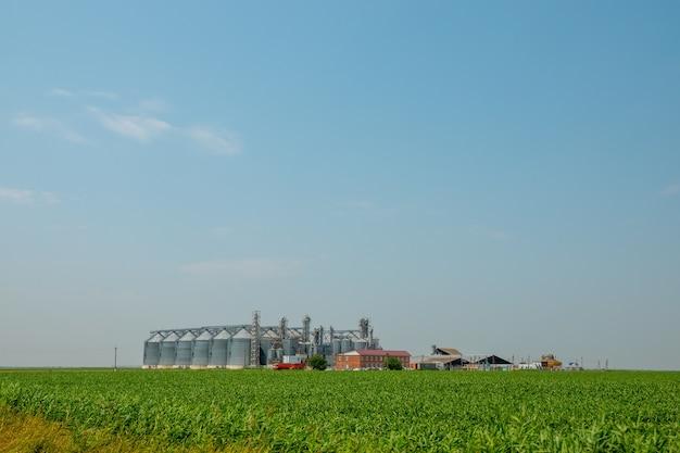 Silos in un campo di orzo. stoccaggio della produzione agricola. in campo