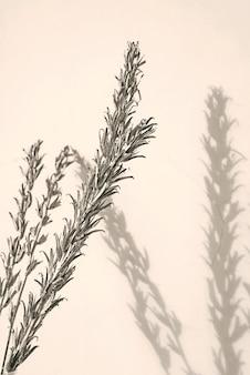 Ramoscelli d'argento e ombre su una parete
