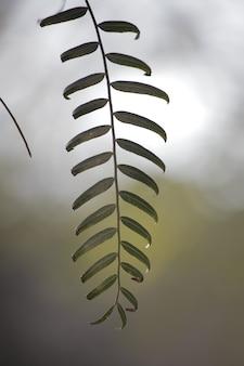 Sfondo naturale zen semplice ed elegante con foglie di albero e spazio di copia