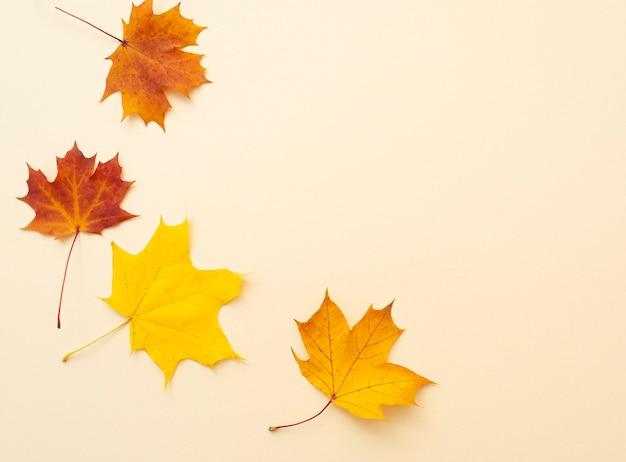 Semplicemente composizione con foglie d'acero autunnali su superficie beige natura morta autunnale come posa piatta