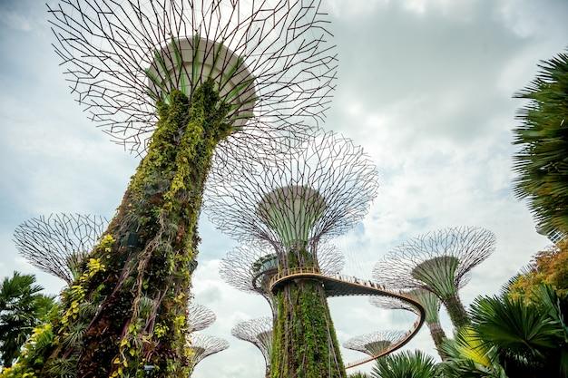 Singapore supertrees in giardino vicino alla baia