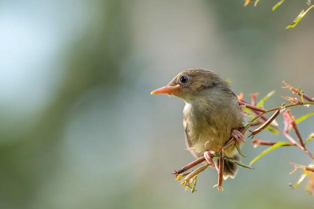 Il canto dell'uccello appollaiato su un ramo di un albero