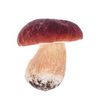 Funghi porcini singoli isolati su sfondo bianco.