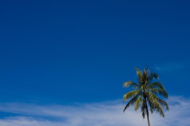 Le singole palme da cocco sul cielo blu soleggiato