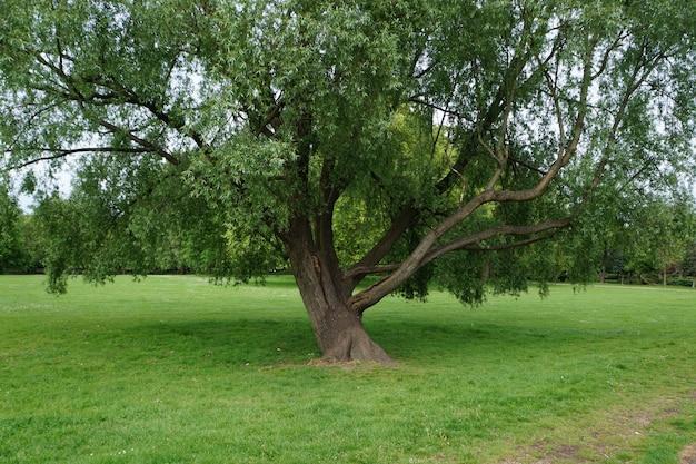 Albero unico verde nel parco