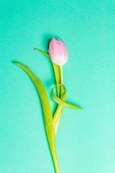 Tulipano rosa singolo su sfondo turchese alla moda trendy