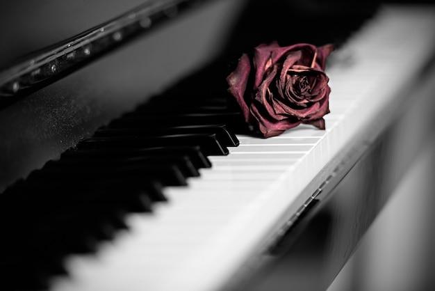 Un'unica rosa morente rossa appoggiata sui tasti di un pianoforte a coda