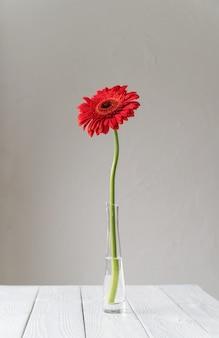 Margherita rossa singola della gerbera in vaso sulla tavola, stile minimo copia spazio