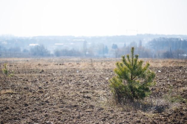 Unico alberello verde in mezzo al campo