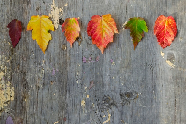 Sei foglie autunnali colorate in alto su una vecchia tavola. posto per il testo