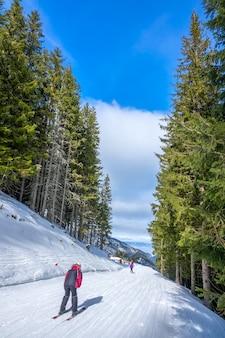 Stazione sciistica con tempo soleggiato. alta foresta di abeti rossi. sciatore su una pista da sci stretta e dolce