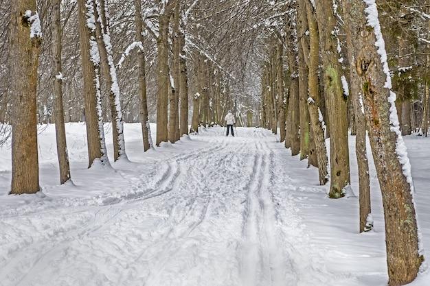 Pista da sci sulla neve lungo la corsia degli alberi nel parco in inverno.