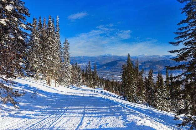 Pista da sci nella foresta di conifere invernale