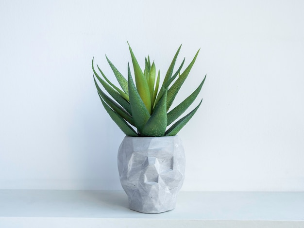 Vaso per piante in cemento a forma di teschio con pianta succulenta verde su ripiano in legno bianco isolato su parete bianca. piccola moderna fioriera in cemento fai da te decorazione alla moda.