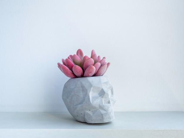 Vaso per piante in cemento a forma di teschio con pianta succulenta rosa su ripiano in legno bianco isolato su parete bianca. piccola moderna fioriera in cemento fai da te decorazione alla moda.