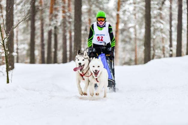 Corse di cani da slitta. i cani da slitta husky tirano una slitta con il musher dei cani. concorso invernale.