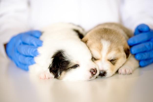 Cani neonati svegli addormentati in una clinica veterinaria