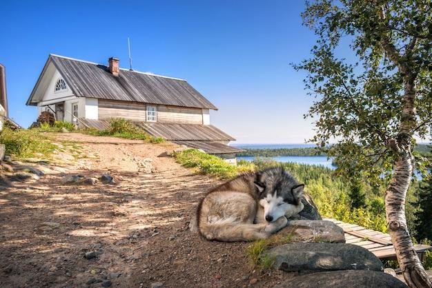 Cane che dorme su una montagna nel calvario eremo della crocifissione sull'isola di anzer isole solovetsky