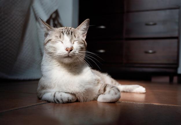 Gatto sonnolento con strisce che prendono il sole mentre si siede sul pavimento
