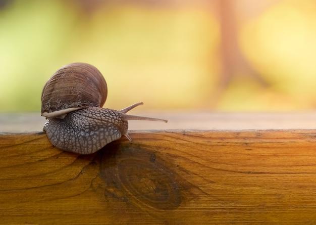 Lumaca dell'uva lenta strisciare sulla tavola in giardino